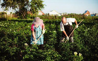 Avoid Straining Your Back While Gardening
